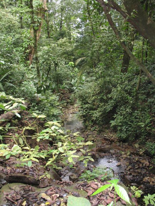 Entering the jungle
