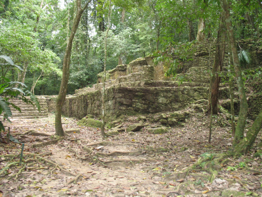 Finding excavation site in the jungle