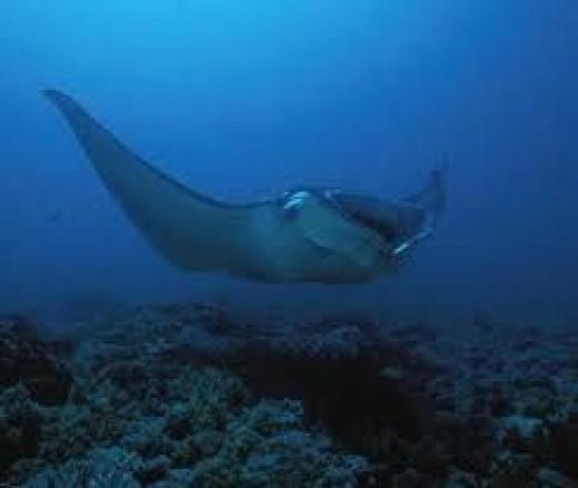 bali-scuba-diving.jpg