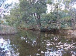 Cotter River, Canberra