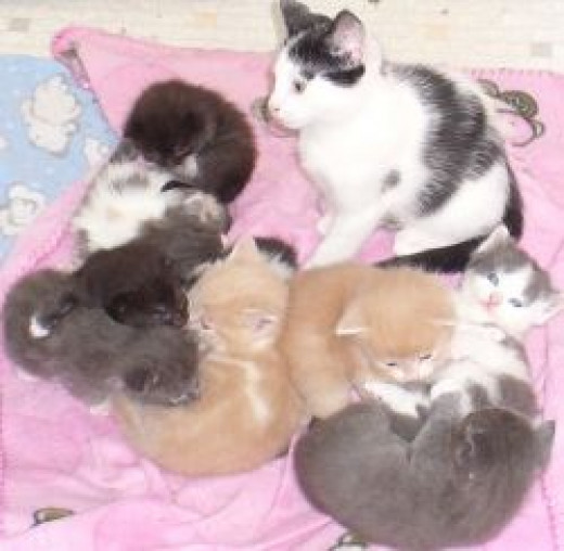 3 litters together