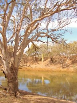 The Once Beautiful Darling River
