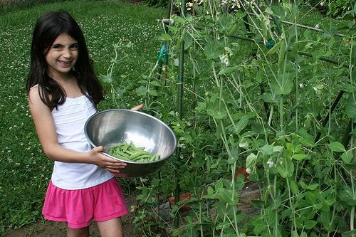which vegetable to grow in a kids' garden