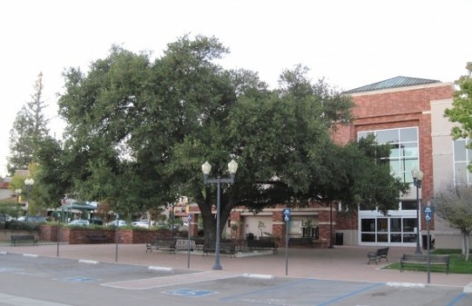 This is one of my favorite views of the Paso Robles City Library. This is the entrance from the 10th Street side where the parking lot is. I love the oak tree near the entrance. People often hang out on the benches under it studying or relaxing.
