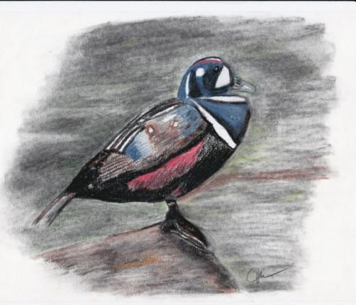 Pastel Duck
