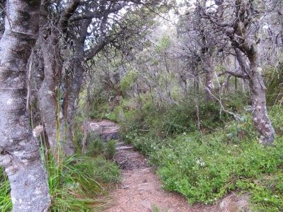Pathway after Twilight Tarn