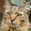 catmaxx profile image