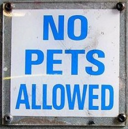 Know if Your Airline Allows Pets