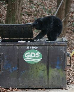 Trash Bear