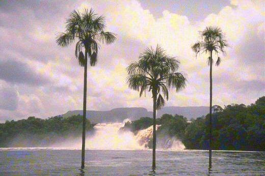 see the coconut trees