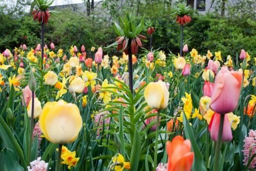 Beautiful flowers at the Keukenhof, Netherlands