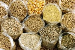 Full grain products: a rich source of fibres!