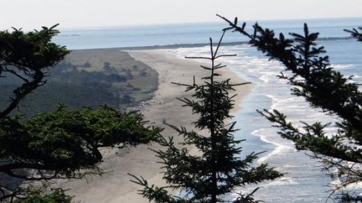 Trees along the Washington Coastline