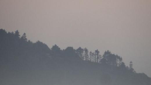 Washington Treeline at Sunset during Fog