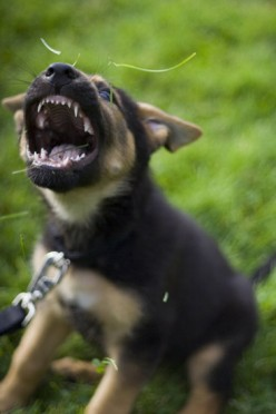Puppy Bite! - What To Do When Your Puppy Bites You