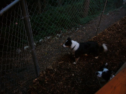 Evening Squirrel Patrol