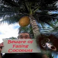 Coconuts Saved Many Lives During Gas Attacks in World War I