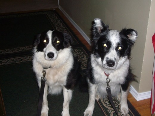 9 pm - Tim and Skye waiting to go on their evening walk before bedtime