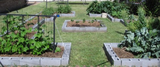 Summer crop rotation