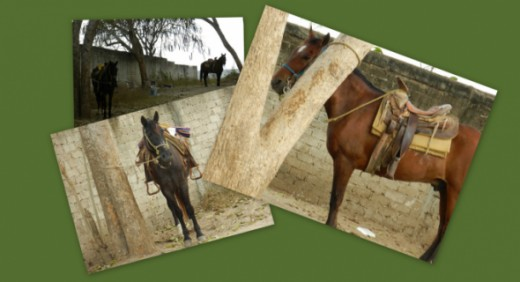 Photos of Horses in Bucerias, Mexico