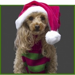 Christmas Sweaters and Hoodies for Dogs
