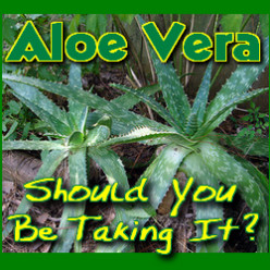 Aloe Vera - Should You Be Eating It?