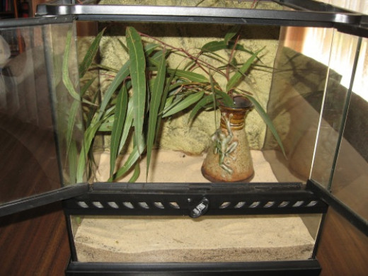 Terranium for pet walking stick insects