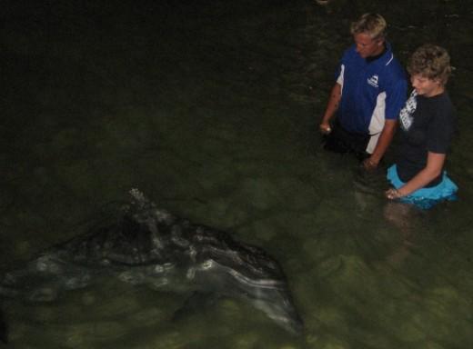 Tangalooma Wild Dolphin Resort
