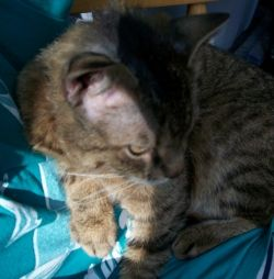 Stalker-the-cat