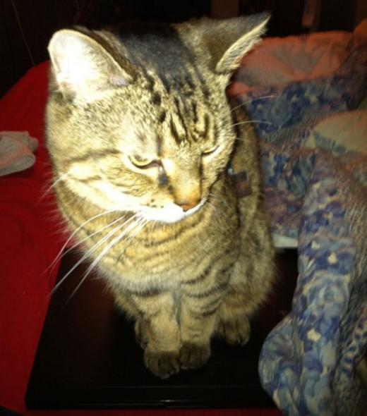 Stalker-the-cat3