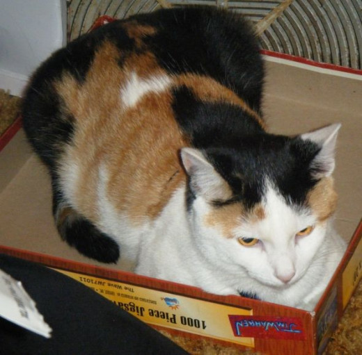 Patches in a box
