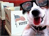 Vote for Dog Treats!