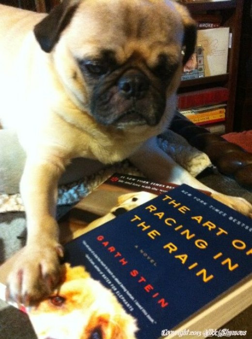 Charlie the Pug chooses books about dogs for summer reading copyright 2013 Vikk Simmons