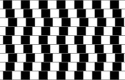 Though it may not look like it, the lines separating rows of tiles are straight.