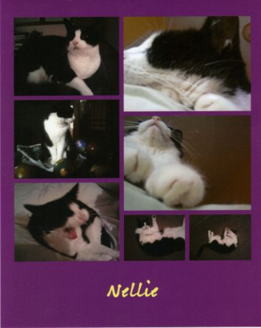 A collage of photos of sweet Nellie.