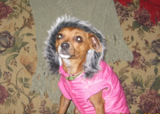 I don't think she's too sure about her new coat!