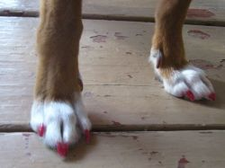 Lexie's pink toenails