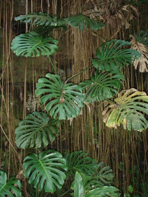 Plant and Tree Roots at Bottom of Stairs with Philodendron at