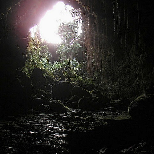 Looking Out the Skylight of the Kaumana Cave