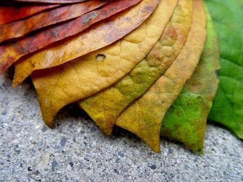 autumn pallete, autumn, fall, palette, pallete, colors, colours, squidoo