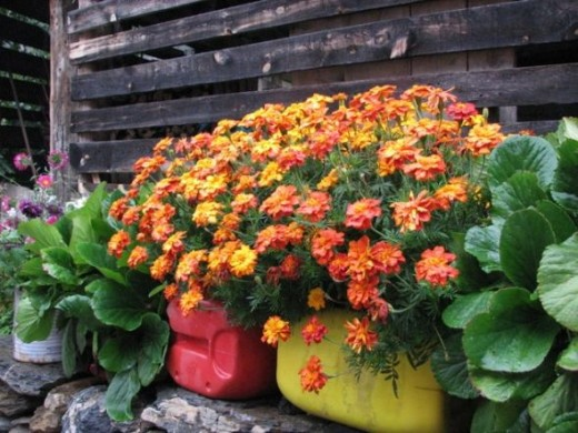 Celebrate fall by planting autumn flowers.