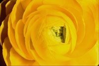 yellow, yellow colour, color, colour, interior design, squidoo