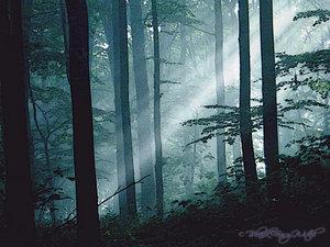 Night Forest by BlackFairyWitch