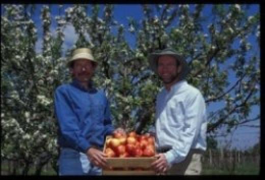 University of Minnesota Apple breeding program