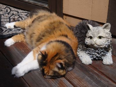 Mali, our calico cat and friend