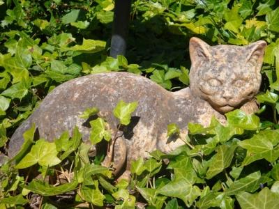 Ivy cat