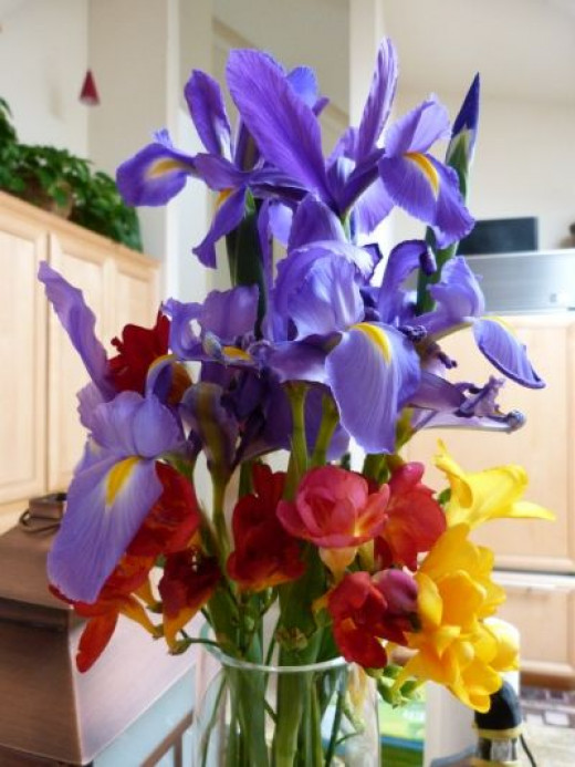 Blue irises, red and yellow freesias make beautiful music together