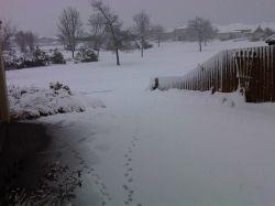 Snowfall photo by Lyn