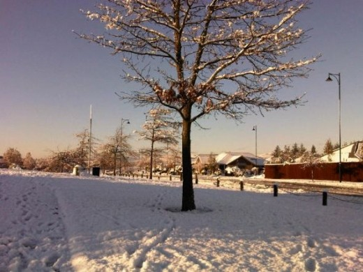 A tree in the snow