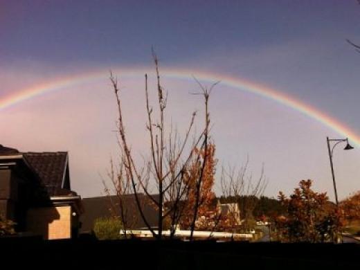 Rainbow Over the Fence